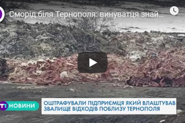 Сморід біля Тернополя: винуватця знайшли і покарали