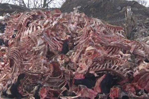 Держпродспоживслужба оштрафувала «Біобластер» на незаконне звалище тваринних решток