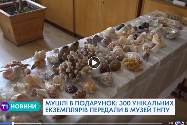Унікальну колекцію із трьохсот мушель передали тернопільському університету