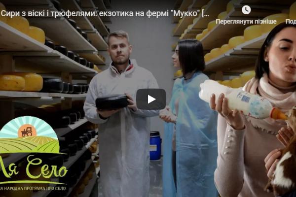 Сири з віскі і трюфелями: на Львівщині молоді фермери виготовляють екзотику (Відео)