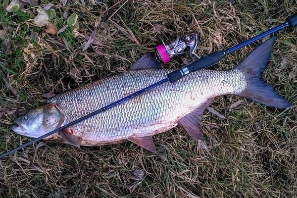 Тернополянин впіймав у Дністрі здоровенну рибину (Фото)