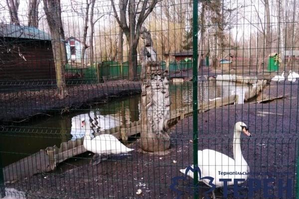 Вхід у зоокуток в Тернополі не приваблює відвідувачів (Фото)