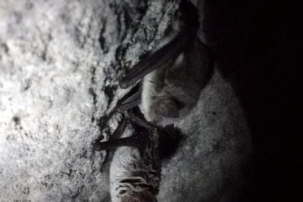 Таємничі мешканці Кременецьких катакомб (фото)