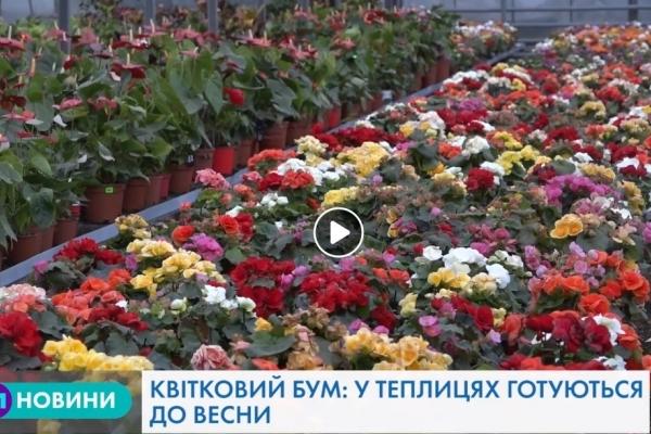 «Квітковий рай»: як у Тернополі вирощують унікальні сорти квітів