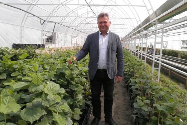 Незвичний сільський бізнес - фундуковий сад на Тернопільщині