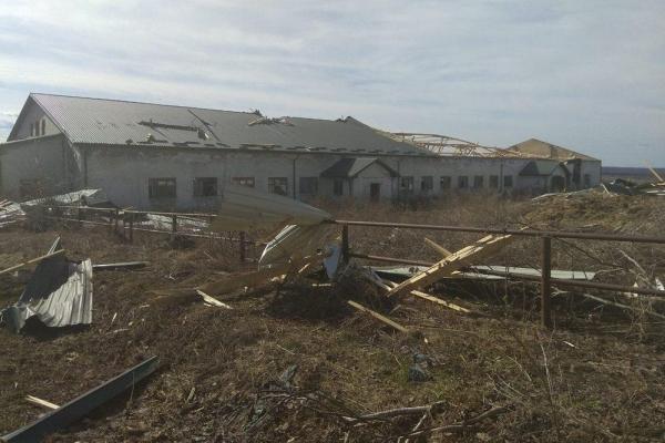 На Тернопільщині сильний вітер зніс дах свинарника (Фото)