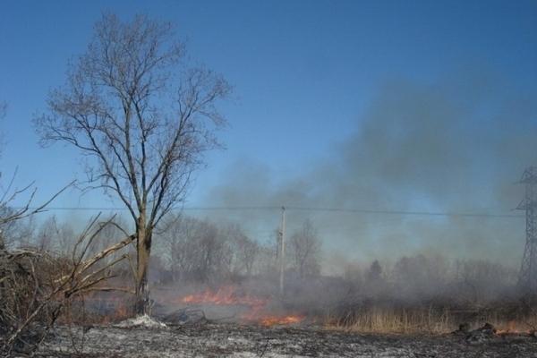 На Тернопільщині через масштабну пожежу сухої трави мало не згорів ліс