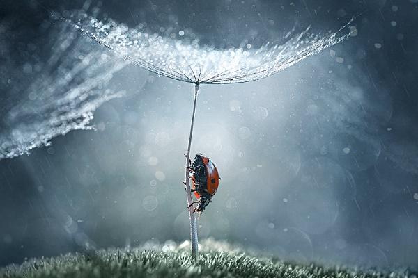 Казкова реальність. Український фотограф знімає фантастичне макро (Фото)