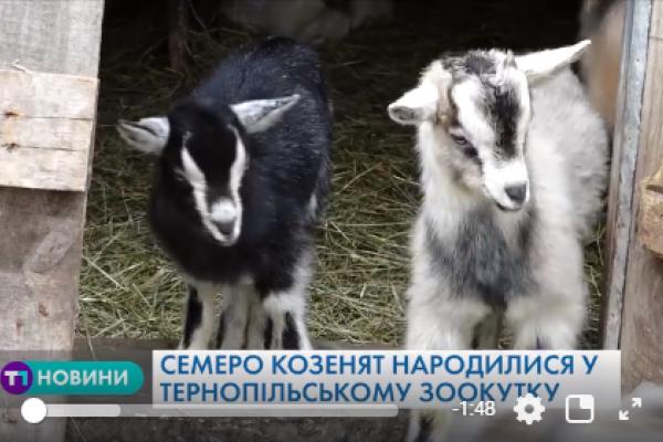У зоокутку парку «Топільче» в Тернополі – поповнення