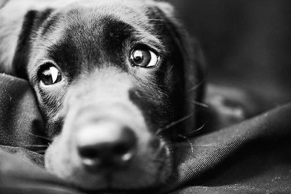 У Тернополі ветеринарна клініка готова допомагати безпритульним тваринам