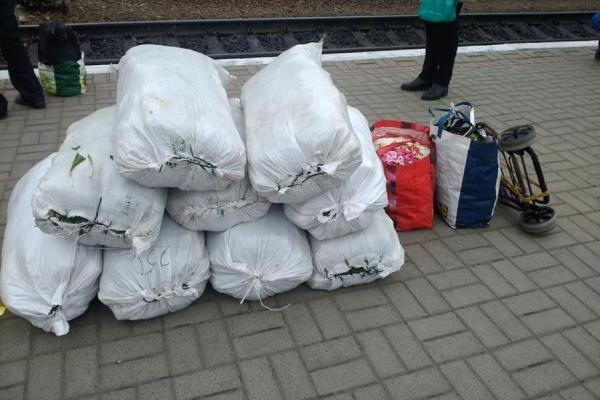 Погрожували знайти та помститись: на тернопільському вокзалі затримали порушників, які сідали на поїзд з мішками червонокнижної рослини (Відео)
