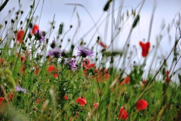Весняна алергія: симптоми, профілактика та лікування