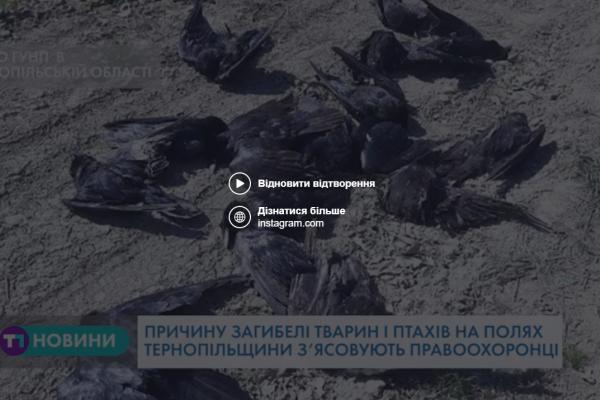 Мертві птахи на полях Тернопільщини: що з'ясували правоохоронці?