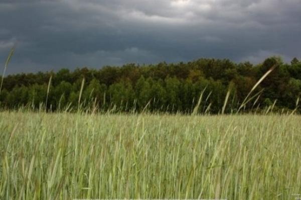 Аграріям західних областей доведеться пересівати поля після негоди