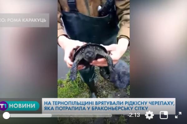 На Тернопільщині врятували рідкісну черепаху, яка потрапила у браконьєрську сітку (Відео)