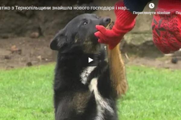 Хатіко з Тернопільщини знайшла нового господаря і народила цуценят