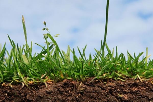 Порахували збитки тернопільських аграріїв від сильних дощів