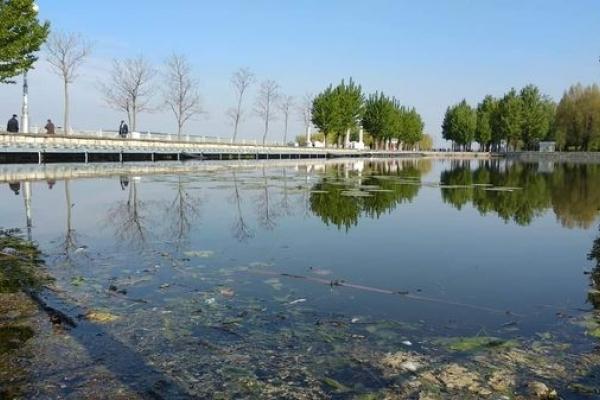 Мертві щурі і риба плавають у Тернопільському ставі біля острівка «Чайка» (Фото)