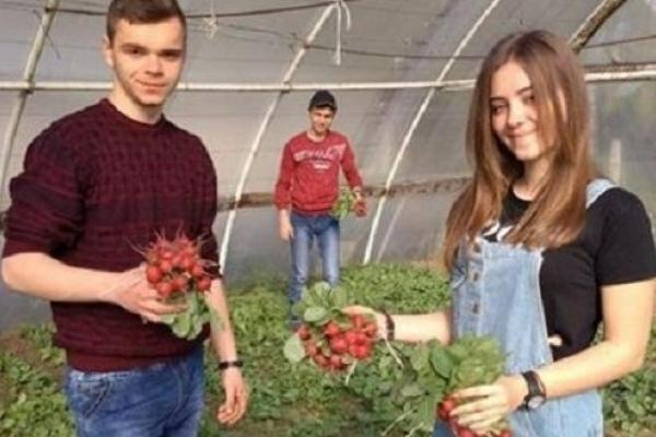 Студенти Заліщицького агроколеджу самі себе обкормлюють