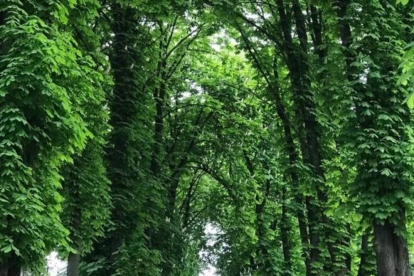 На Тернопільщині з'явився власний «Тунель кохання» (Фото)