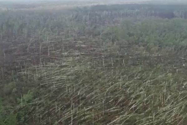 Смерч за лічені хвилини знищив 100 гектарів лісу в Житомирській області (Відео)