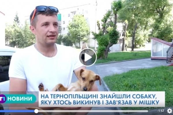 Нелюди: на Тернопільщині знайшли собаку, яку хтось зав'язав у мішку