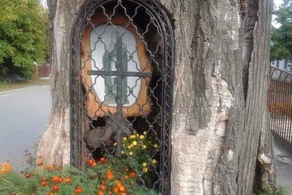 На Тернопільщині чоловік перетворив дерево у храм Божий (Фото)