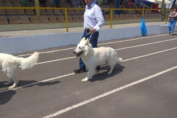 На Тернопільщині відбулась міжнародна виставка собак (Фото)