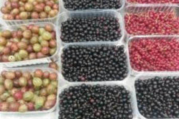 Ціни на фрукти і ягоди на тернопільських ринках кусаються