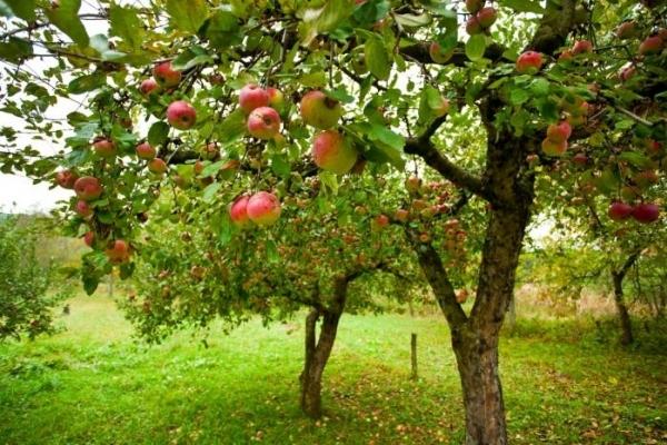 Аграрна Тернопільщина: Садам цвісти