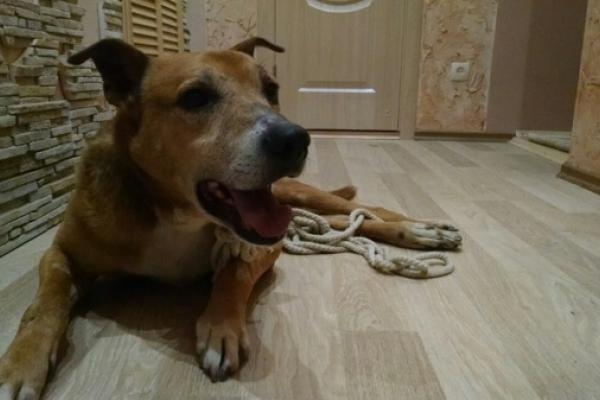 Неймовірна історія безпритульної собаки у Тернополі