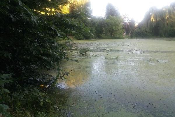 Жахливий сморід у парку «Топільче» у Тернополі відлякує відвідувачів