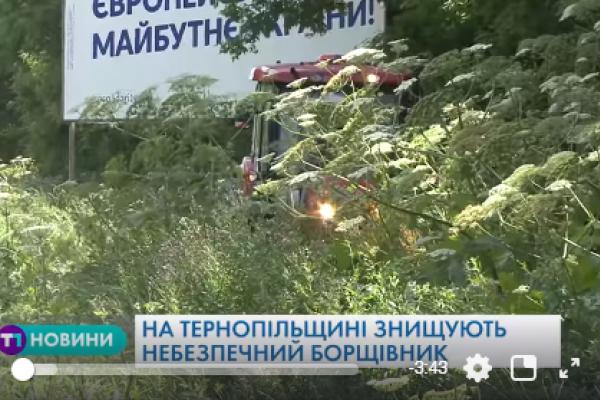 Як на Тернопільщині боряться із небезпечною рослиною?