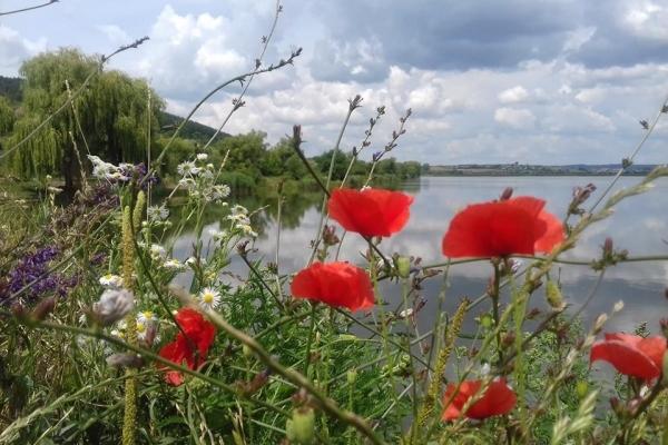 У соцмережі показали неймовірну красу озера на Тернопільщині (Фото)
