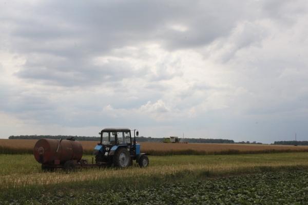 На Тернопільщині освятили поля на вдалі жнива (фото)