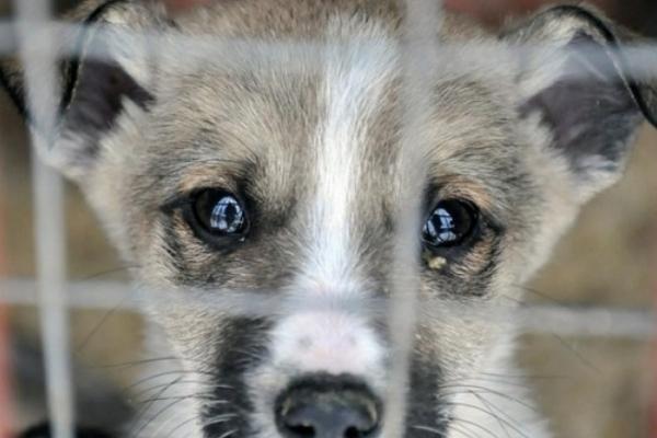 На Тернопільщині пенсіонерка забила собаку лопатою