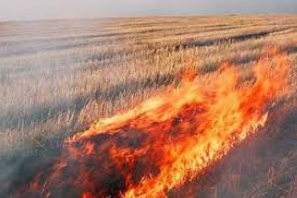 На Тернопільщині горять поля
