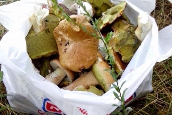 Кременчанин під час ранкової проогулянки назбирав 7 кілограм грибів