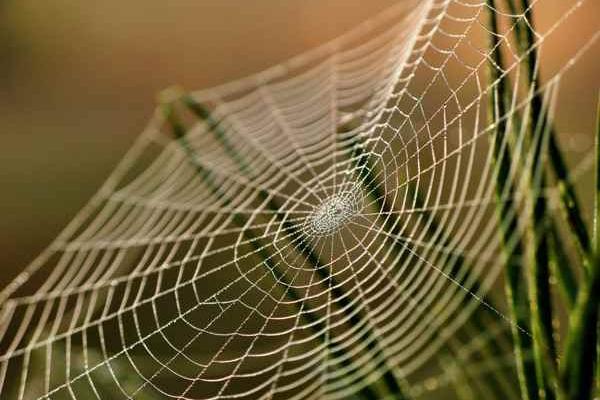 На Тернопільщині зафіксували появу отруйного павука (Фото)