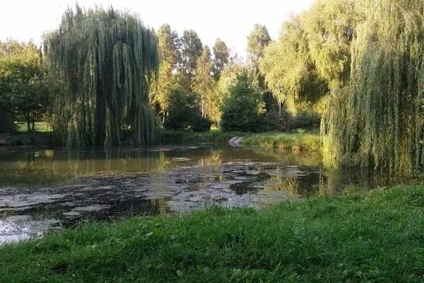 У Тернополі за 1,7 млн очистять водойми гідропарку