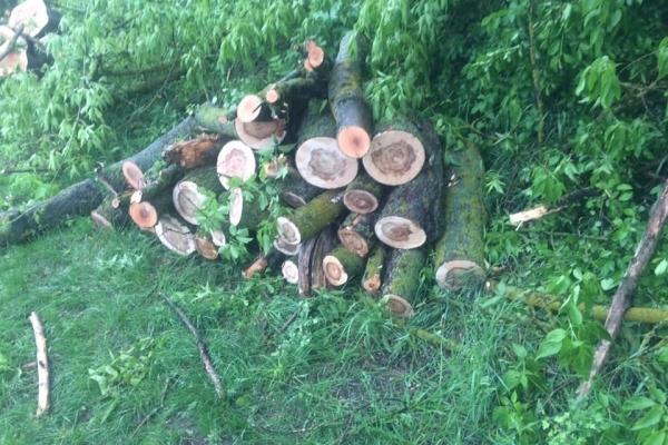 Санітарна вирубка дерев на Підволочищині перетворилася у бізнес-аферу