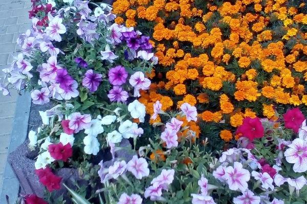 Звучить квіткова симфонія серпня