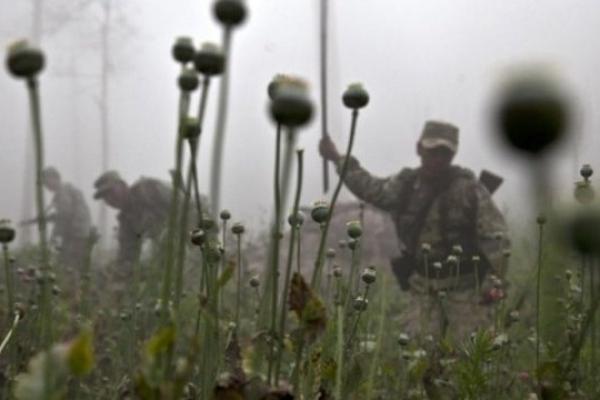 На Тернопільщині вилучили більше ніж 27 тис. рослин маку