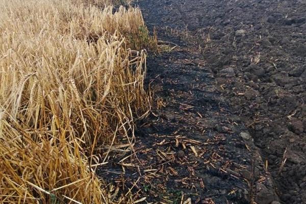 На Тернопільщині люди спалюють стерні