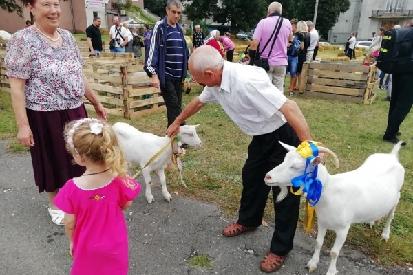 33 кози з Тернопільщини вийшли з своїми господарями на дефіле (Фото)