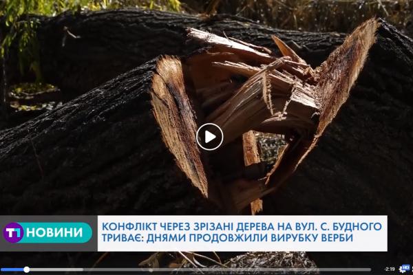 В Тернополі не вщухає конфлікт через зрубану вербу (Відео)