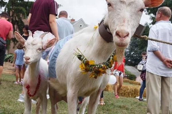 У Козові відбувся 4-й фестиваль «Коза-фест»