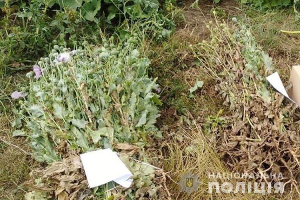 За два з половиною місяці поліцейські вилучили 27925 рослин маку