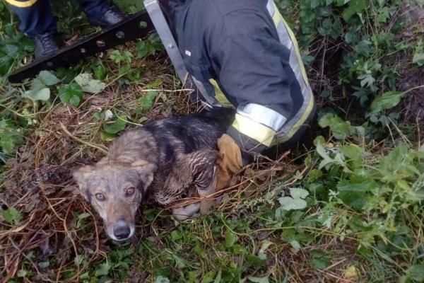 На Тернопільщині, собака впала у закинуту криницю