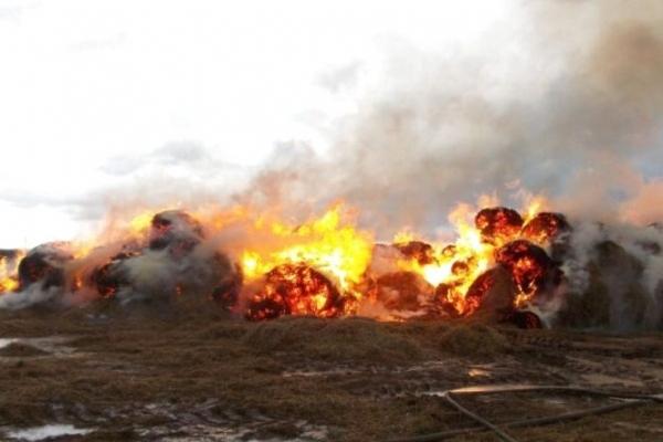 На Тернопільщині люди продовжують підпалюють пожнивні залишки та суху траву